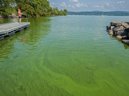 August 2015 photo of an algae bloom on St. Albans Bay in Lake Champlain.