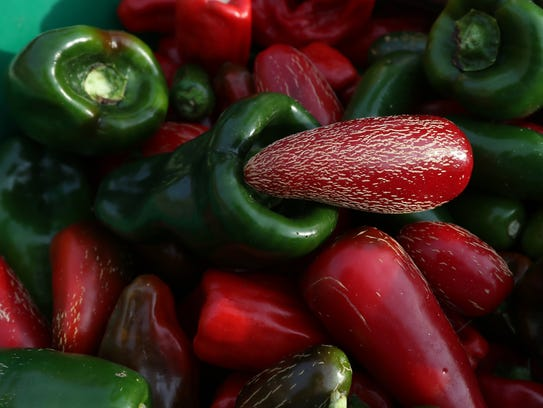 These different types of peppers will be turned into