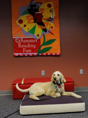 Woody, a therapy dog, waits to be read to at Ronning Library in Sioux Falls, S.D., Thursday, June 4, 2015. The Tail WagginÕ Tutors is a program put on by Sioux Land libraries.