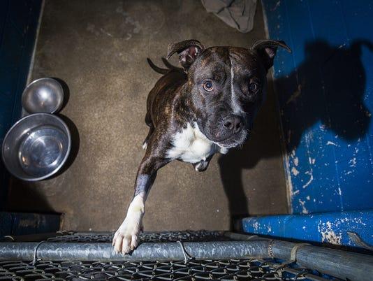 636020173204507046-shelterdog.jpg