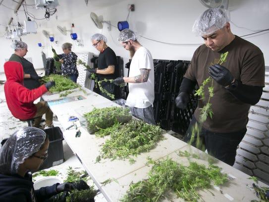 True Harvest cultivation tech John Samsing (right)