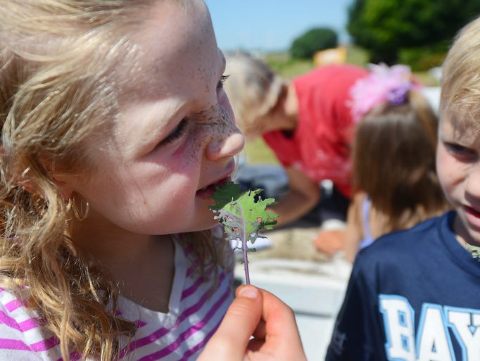 The YMCA Kids Camp at the Howard YMCA has a lush vegetable garden growing this summer under the tutelage of a master gardener. Natalie Squire, left, samples a sprig of kale freshly picked from the garden Wednesday, July 30, 2014.  Jim Matthews/Press-Gazette Media