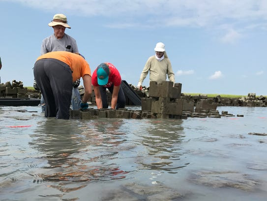 Volunteers work in knee-deep water to build oyster