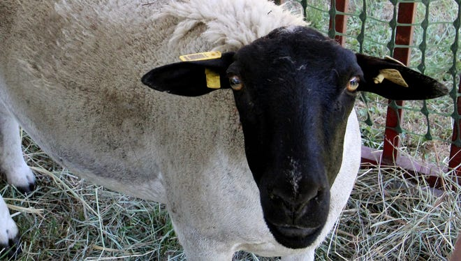 Sheep to Shawl highlights how textiles are made 10 a.m. to 4 p.m. Saturday, May 13, at Willamette Heritage Center. The event is free.