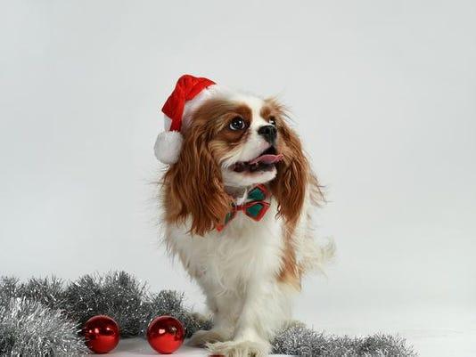 636163014350464167-Cooper-Christmas-Photo-2.jpg