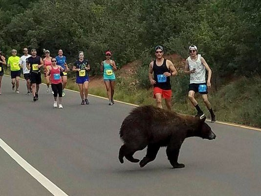 636328133839402318-Bear-in-Race.jpg