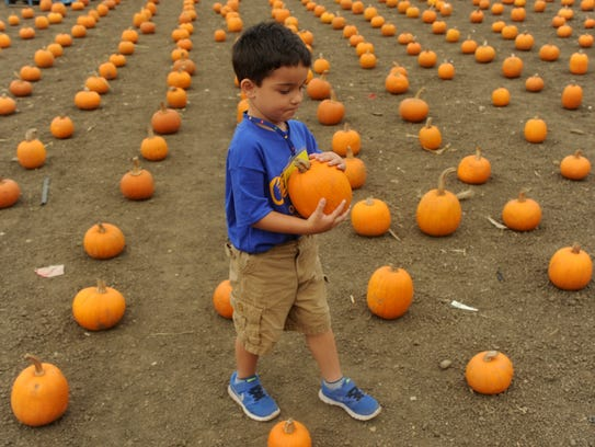 Visit a pumpkin patch in Ojai this weekend.