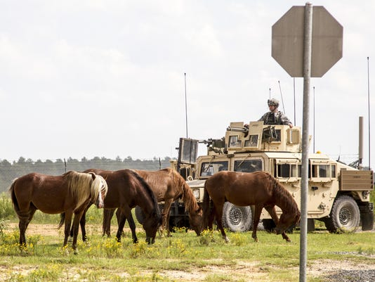 Fort Polk horses