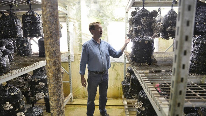Michael Doyle of Forest Mushrooms Inc. looks at a crop of oyster mushrooms growing Tuesday at the rural St. Joseph business. The business is now selling dried mushrooms online.