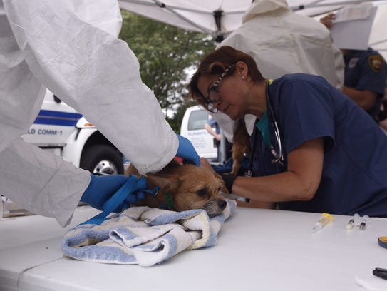 Workers dressed in hazmat gear care for dogs in front