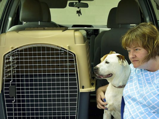 When Jennifer Vanderau of the Cumberland Valley Animal Shelter transports dogs like Maria on hot summer days, she uses a carrier and makes sure the air conditioning is on during the ride and while the pets in the vehicle.