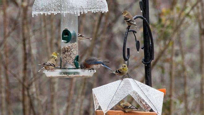 Birds congregate on a bird feeder at the Wildlife-Friendly Yards Tour