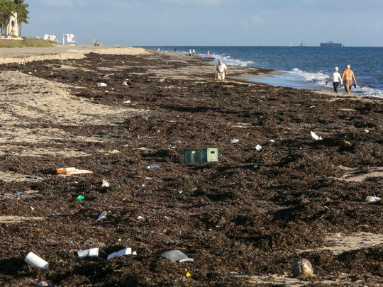 Thick mats of seaweed with trash tangled throughout it cover parts of the beach about a 100 yards south of Midtown Beach in Palm Beach on December 16, 2015.