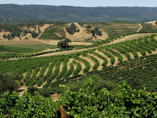 Global Warming Prompts Fears For California Wine's Future