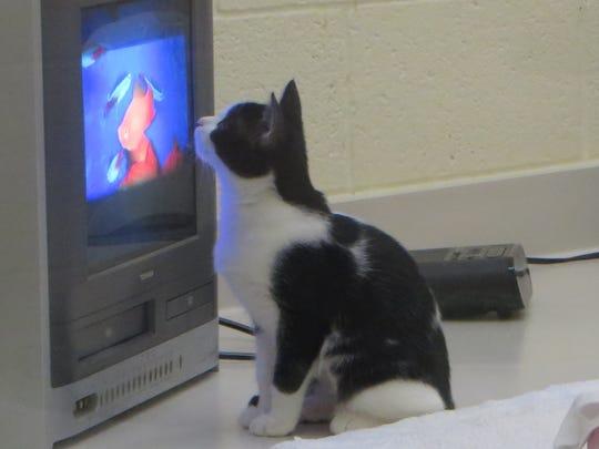 Missy is an avid fan of television!