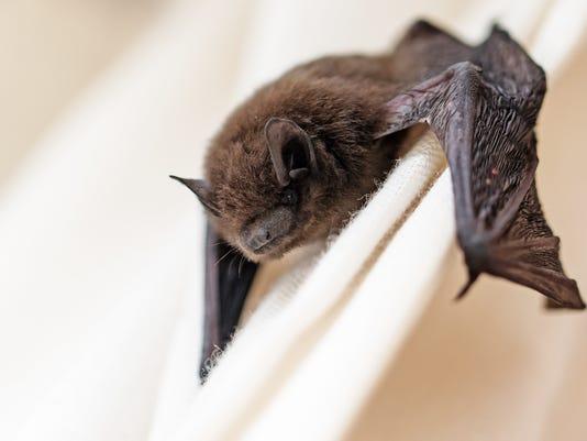 #stock Bat Stock Photo