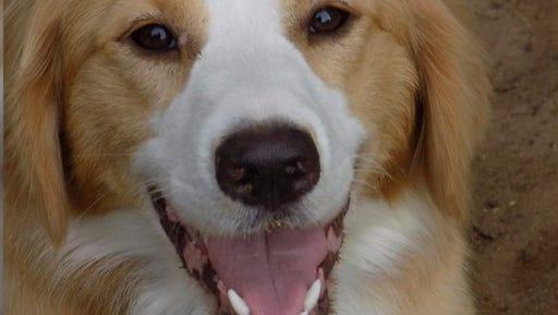 Izzy the dog.