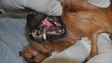Yorkshire terrier with microchip number 071 101 071
