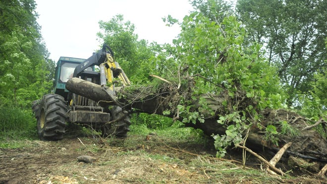 A log skidder pulls a large tree away from the bank of the Black Fork River.