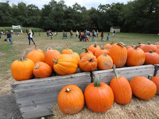 Children mill around in the field as pumpkins line