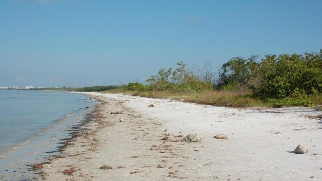Bunche Beach is the location of many guided walks.