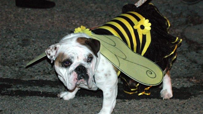 The Coldwater Halloween parade, which often featured costumed pets, is canceled this year because of concerns about spreading COVID-19.