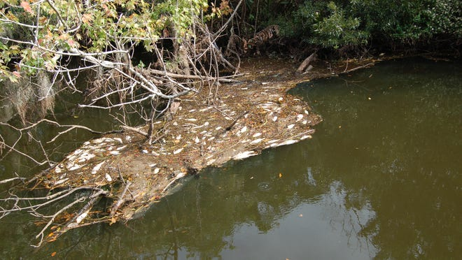 Catfish and other wildlife have been turning up dead this week in Turkey Creek.