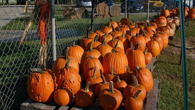 Friday kicks off the Fall Festival and Halloween Extravaganza, which runs daily through Oct. 31.