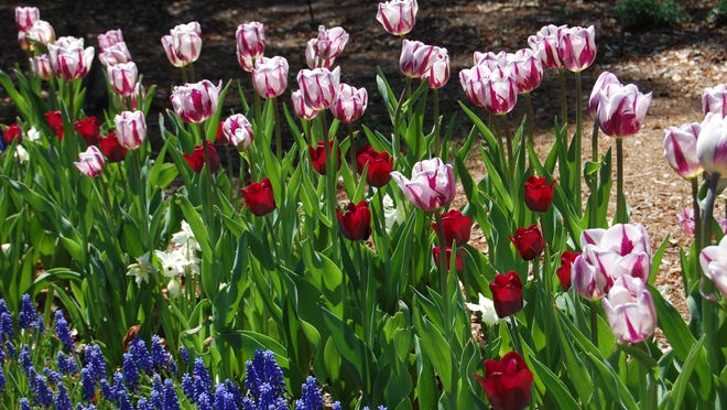 Time to plan your bulb plantings.