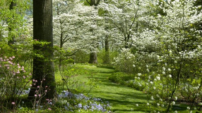 Spring ephemerals line the forest floor, thriving during the short window before trees' leaves block the sunlight.