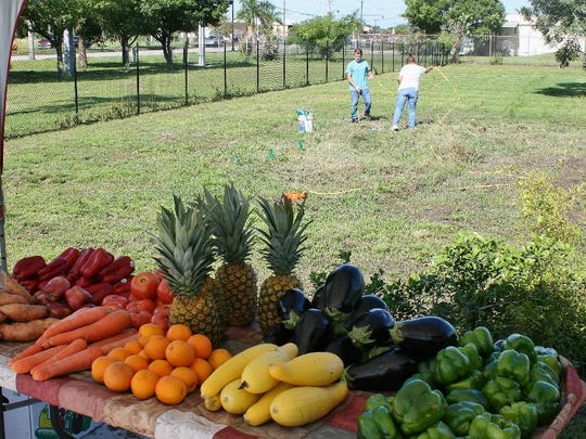 Some of the produce available to the needy is displayed