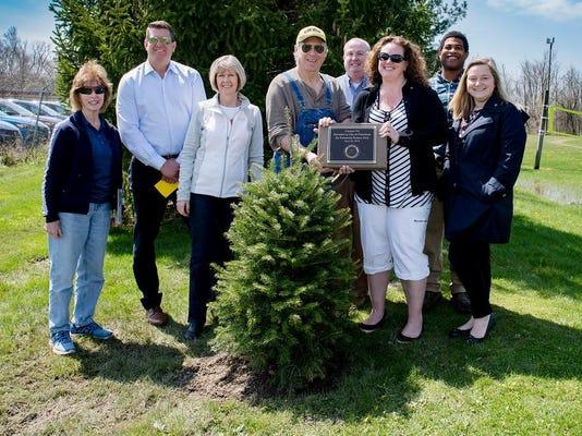 Planting Fir Tree -XL