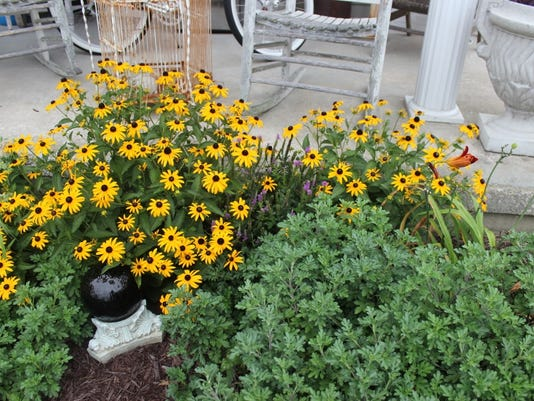 brown-eyed susans.jpg