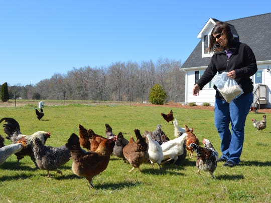 Laura Kucharik, of Garden Shack Farm, hand feeds her