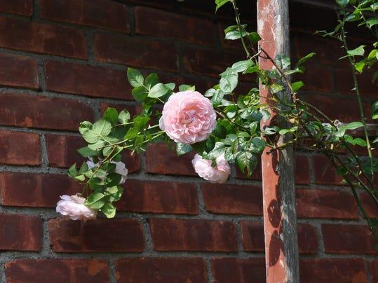 Gardening-Scents_Thad.jpg