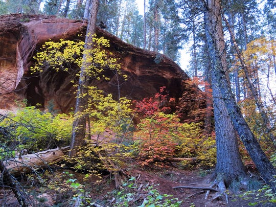 The beautiful fall colors adorning the forest in the West Fork of Oak Creek Canyon.