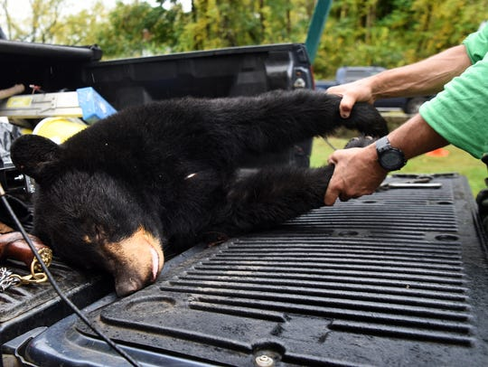 A black bear killed on the opening day of New Jersey's
