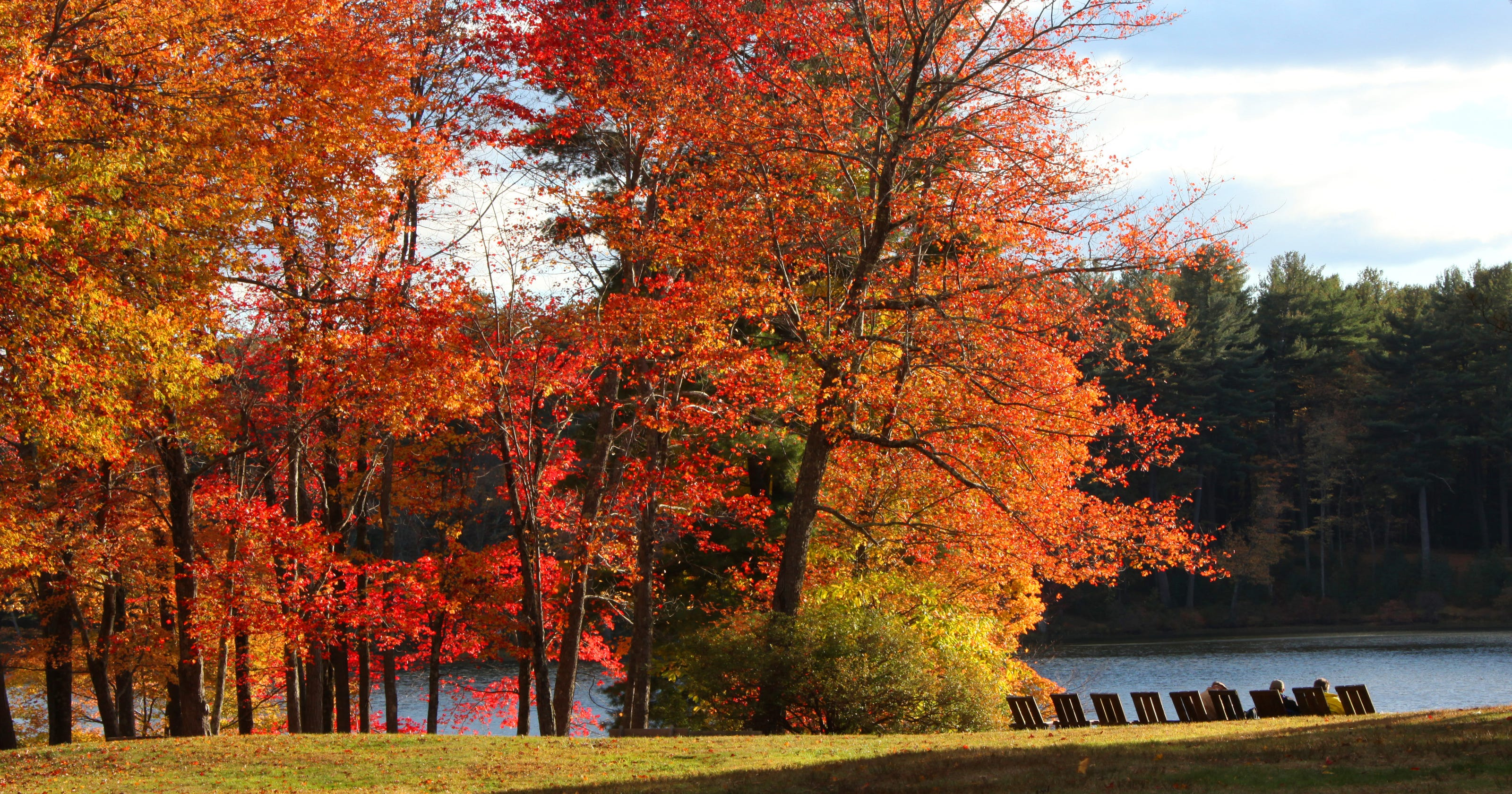 Fall foliage forecast for 2020: How will leaf peeping look this year?