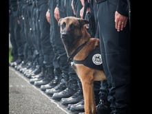 'Indispensable' French K9 killed in raid