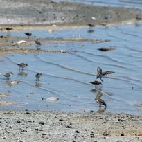 SunBirds gather along the shore of Bombay Beach at the Salton Sea on July 28.