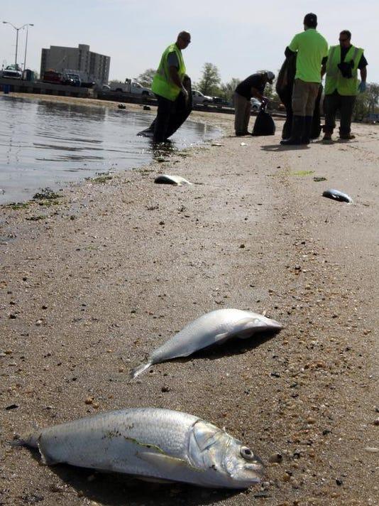 fish0512a.jpg