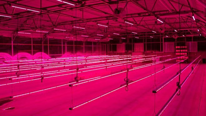 Colorado State University and Philips Lighting will partner on LED lighting at CSU's horticultural center.