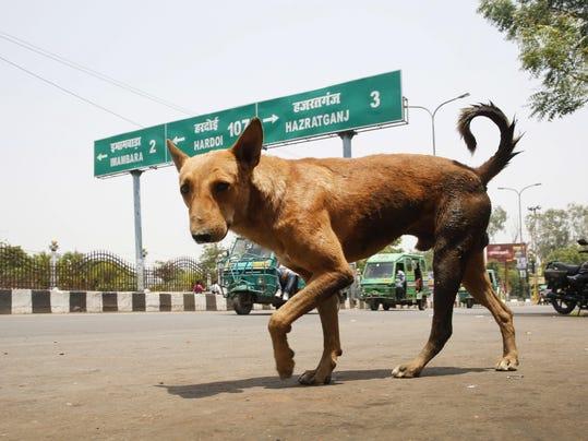 India Dog Attacks