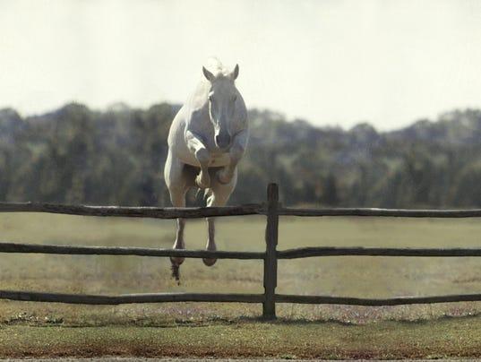 Snowman Jumps A Fence