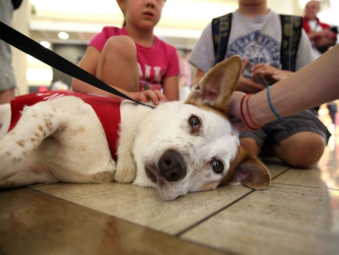 "Wearing red vests that instruct people to ""pet me,"" the dogs in the Pets Unstressing Passengers, or PUP, program wander LAX's terminals with their owners, providing comfort and airport information."