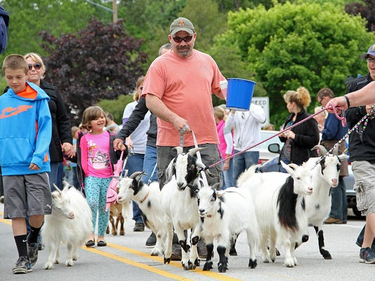 goat parade