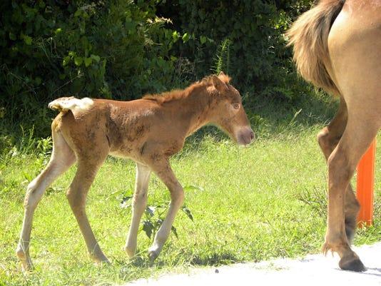 Pony N2BHS-AIO