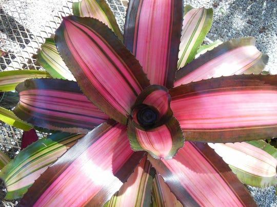 colorfulbromeliad.jpg