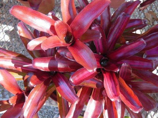 somebromeliads.jpg