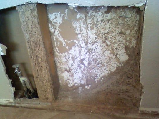 PNI 0816 rosie romero 01termites